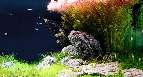 S wasser aquarium guide von axperto for Aquarium heizen