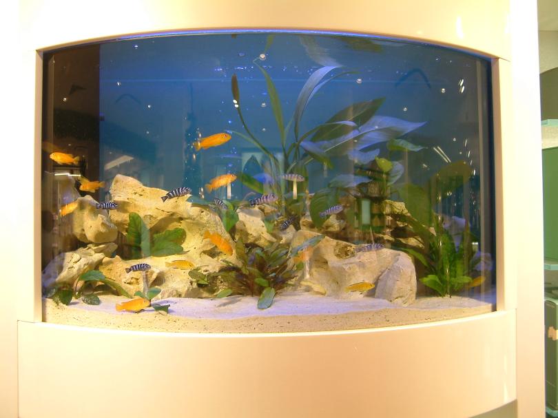Welche arten von aquarien gibt es for Aquarium fische arten