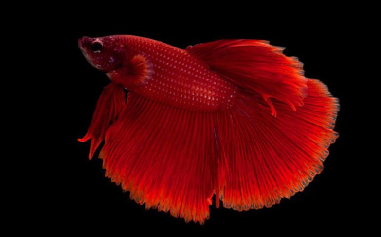 Suesswasseraquarium richtig pflegen